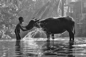 PhotoVivo Gold Medal - Ajar Setiadi (Indonesia)  Morning Bathing