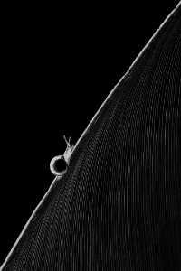 PhotoVivo Gold Medal - Zhili Gu (China)  Snail