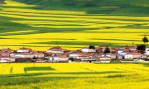 APU Honor Mention e-certificate - Jinchuan Zhang (China)  Golden Land