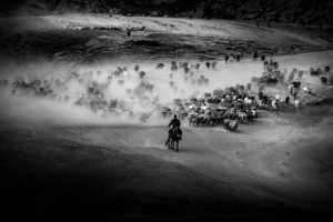 PhotoVivo Gold Medal - Xiaohua Lu (China)  Herds