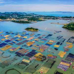 PhotoVivo Gold Medal - Zuojian Xie (China)  Colorful
