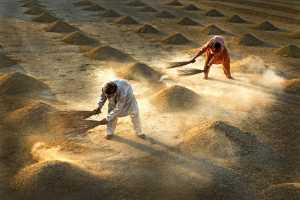 SIPC Merit Award - Sami Ur Rahman (Pakistan)  Farmers At Work