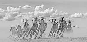 APAS Honor Mention e-certificate - Liansan Yu (China)  Horse Race