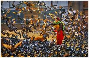 PhotoVivo Gold Medal - Yan Wong (China)  Give And Take