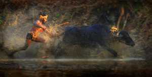 APAS Gold Medal - Srikanta H Byakod (India)  Beauty Of Race