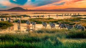 ICPE Honor Mention e-certificate - Jing Li (China)  Zebra Herds