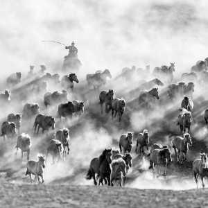 PhotoVivo Gold Medal - Lianjun Quan (China)  Galloping