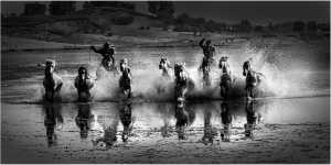 PhotoVivo Honor Mention e-certificate - Thong Tran (USA)  Horses On The River 2