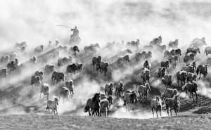SCPS Honor Mention e-certificate - Lianjun Quan (China)  Gallop The Horse