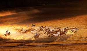 APU Honor Mention e-certificate - Aizhen Jiang (China)  Ten Thousand Steeds Gallop