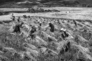 PhotoVivo Gold Medal - Arnaldo Paulo Che (Hong Kong)  Harvest 4