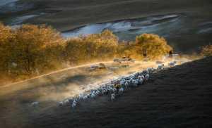 Raffles Merit Award E-Certificate - Yu Liu (China)  Herding Back