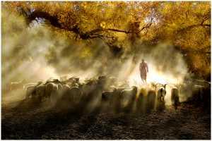 RPST Gold Medal - Thomas Lang (USA)  Herding Light