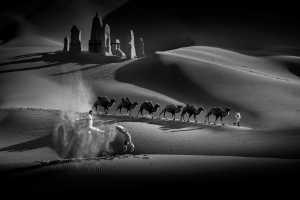 APU Gold Medal - Guochang Chen (China)  Desert Camel Shadow-1