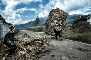 PhotoVivo Honor Mention e-certificate - Phillip Cheang (Malaysia)  Harvest
