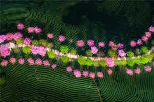 SIPC Merit Award - Bin Yu (China)  Garden Full Of The Beauty Of Spring