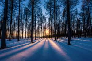 PhotoVivo Gold Medal - Xiaohui Qiu (China)  Woods In The Polar