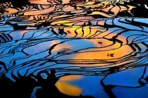 PhotoVivo Honor Mention e-certificate - Tong Hu (China)  Idyllic Light