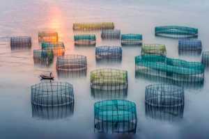ICPE Honor Mention e-certificate - Changxue Xie (China)  Purse Net Fishing