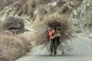SIPC Merit Award - Guoliang Li (China)  Burden