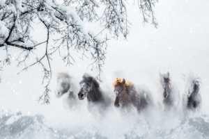 PhotoVivo Gold Medal - Xuebiao Yang (China)  Ink Painting Horses
