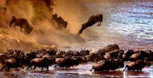Circuit Merit Award e-certificate - Sergey Agapov (Russian Federation)  A Large Migration Of Wildebeest 2