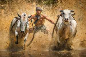 Circuit Merit Award e-certificate - Yiliang Yang (China)  Running Of The Bulls10