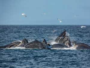 Circuit Merit Award e-certificate - Alexey Suloev (Russian Federation)  Whales And Gulls-Alaska
