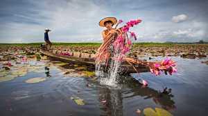 Circuit Merit Award e-certificate - Tan Tong Toon (Malaysia)  Water Lily Farmer
