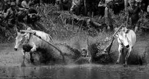 PhotoVivo Gold Medal - Udaya Thejaswi Urs (India)  Collapsed