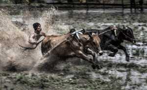 PhotoVivo Gold Medal - Zhijian Ye (China)  Run Wild