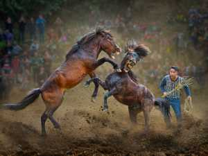 PSA Gold Medal - Heng Liang Wu (Taiwan)  A-Horses Raise His Legs For Fighting
