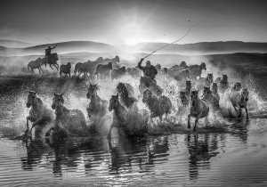 APU Spring Gold Medal - Yuk Fung Garius Hung (Hong Kong)  Running Horses 3