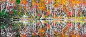 PhotoVivo Gold Medal - Penfei Gao (China)  Autumn Scenery