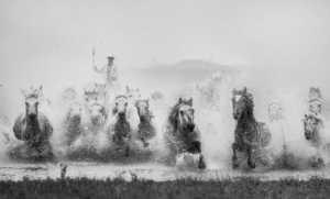 PhotoVivo Gold Medal - Xiangli Zhang (China)  Gallop Horse
