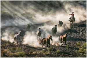 PhotoVivo Honor Mention e-certificate - Thomas Lang (USA)  Chasing Mustang 18-05