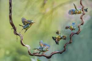 PhotoVivo Honor Mention e-certificate - Dazhong Wang (China)  Birds Meeting