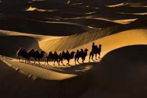 GTPC Merit e-certificate - Guangyu Huang (China)  Camel Team