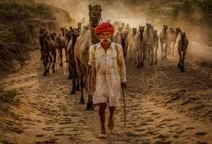 PhotoVivo Gold Medal - Debopam Chakraborty (India)  On The Way To Camel Fair