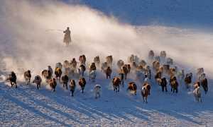 PhotoVivo Gold Medal - Lili Yudiarta (Indonesia)  Horse Rider 002