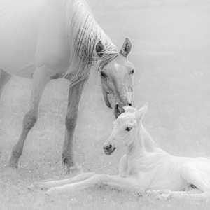 PhotoVivo Gold Medal - Qun Gu (China)  Horses