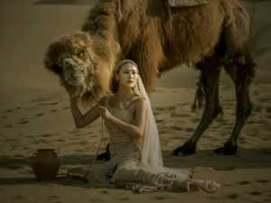 PhotoVivo Honor Mention e-certificate - Peiwen Sun (China)  Camel And Woman