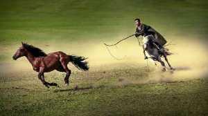 Circuit Merit Award e-certificate - Chen Ni (China)  Lasso A Horse