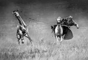 Raffles Merit Award E-Certificate - Wei Ping Peng (Australia)  Catch A Horse Bw