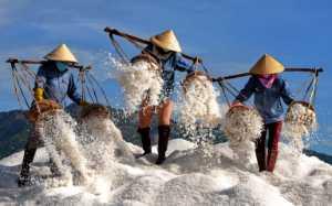 PhotoVivo Honor Mention e-certificate - Phong Tran (Vietnam)  Salt Workers 2
