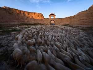 APAS Honor Mention e-certificate - Peiwen Sun (China)  Herding