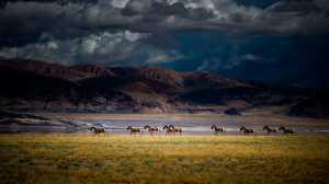 PhotoVivo Gold Medal - An Liu (China)  Running Horses