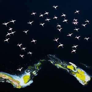 APAS Gold Medal - Yong Lin (China)  The Spirit Of The Sky 3