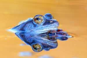APU Honor Mention E-Certificate - Aleksander Cufar (Slovenia)  Frog-P1000