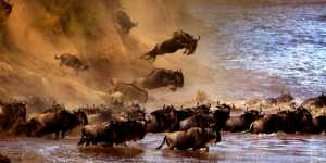 RPST Gold Medal - Sergey Agapov (Russian Federation)  The Great Migration Of Wildebeest 2